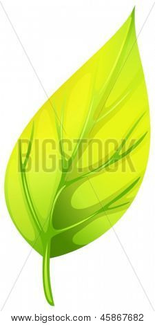 Illustration of a pointed leaf on a white background