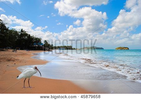 Warfe Beach in St Lucia