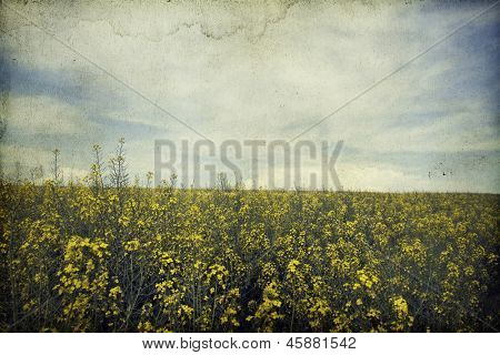 Vintage photo of summer field and blue sky
