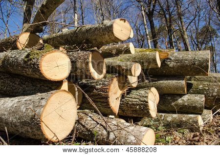 Deforestation Cut Tree Logs Stack Forest Blue Sky