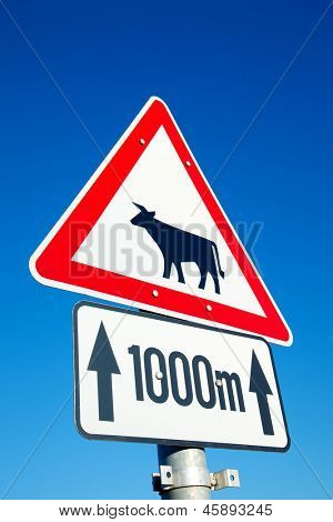 Cows warning traffic sign