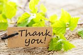 foto of thankful  - a natural looking label with thank you and green leaves and wood as background - JPG