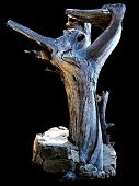 stock photo of contortion  - A twisted and contorted cypress stump stands waving its  - JPG