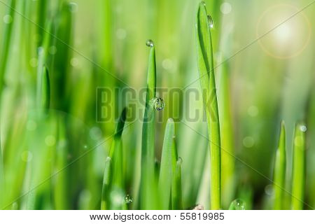 Detail Of Green Grass With Sparkling Dewdrops