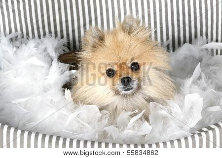 Toy Pom In Basket