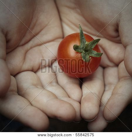Boy Holding Tomato