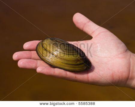 Pear-shell