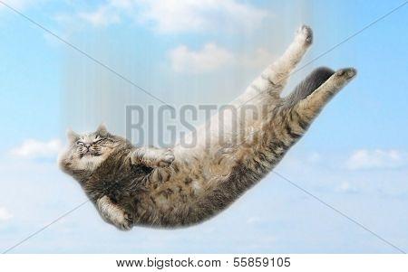 Funny falling cat