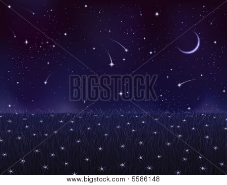 Night Summer Meadow Covered With White Star Flowers