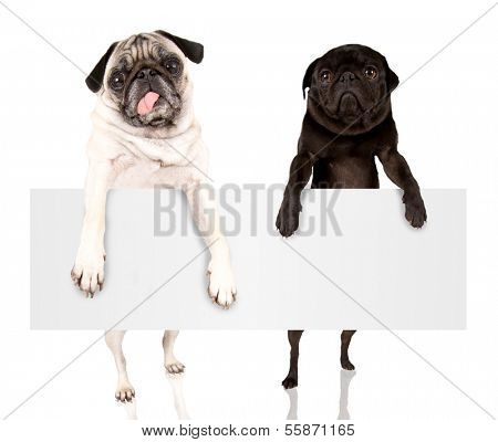 two pugs holding a blank sign that can be filled with text