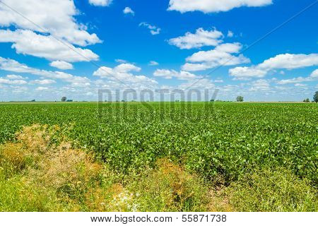 Beautiful Summer Field