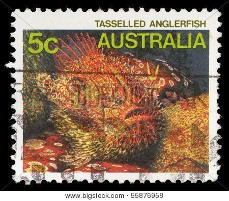 AUSTRALIA - CIRCA 1984: A Stamp printed in AUSTRALIA shows the Tasseled Anglerfish, series, circa 1984