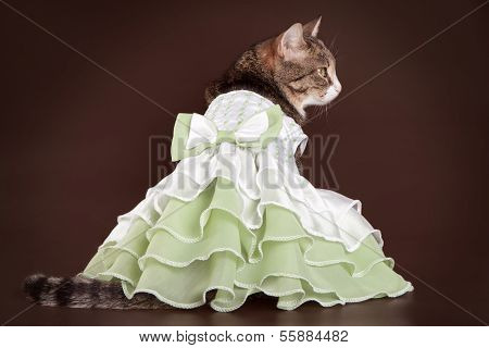 Cat in green frilling dress on brown background