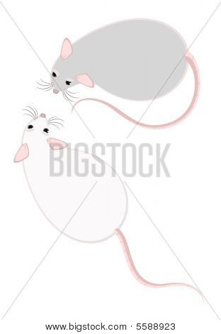 poster of small fluffy mice