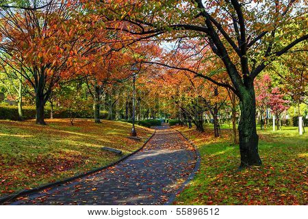 Autumn Laves At Hiroshima Central Park In Japan