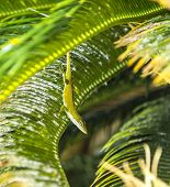 Common Salamander In The Palm Tree