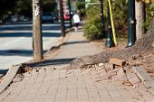 image of unsafe  - A massive tree root pushes through the bricks of a sidewalk in an urban area - JPG