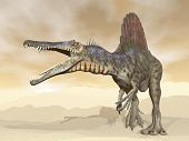 stock photo of desert animal  - Spinosaurus dinosaur walking and roaring in the desert - JPG