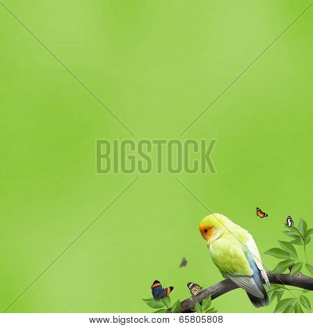 Parrot With Butterfly In A Branch On Green
