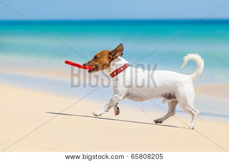Dog and red flying disc