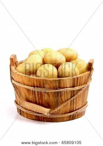 Young Potato In A Bucket
