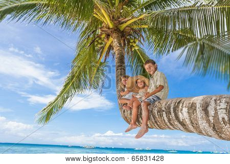 happy children - boy and girls - sitting on palm tree, tropical beach vacation