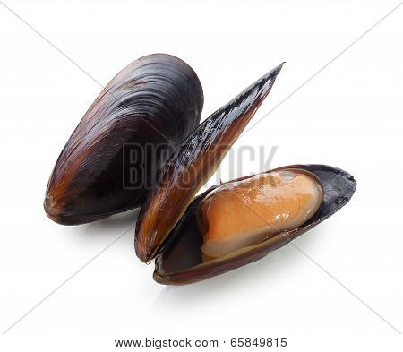 Mussel In The Shell