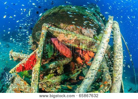 Glassfish and grouper underwater