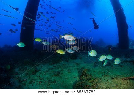 Shoals of fish underneath an old oilrig