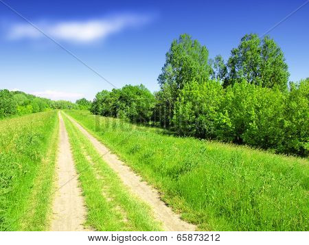 Summer landscape with green grass, road and trees