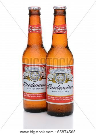 Two Budweiser Bottles With Condensation