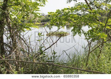 Plants On The Lagoon Near Marina Romea