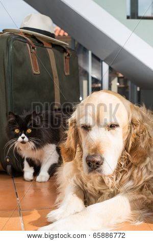 Golden Retriever And Persian Cat Books