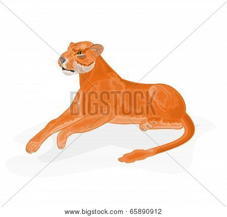 Lioness Vector Illustration