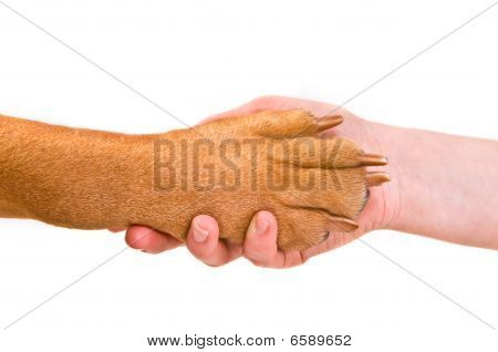 Handshake With A Dog