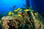 picture of bigeye  - Colorful tropical fish and SCUBA divers swim around the manmade debris of an abandoned oil rig - JPG