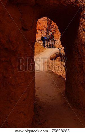 Hiker On Narrow Trail