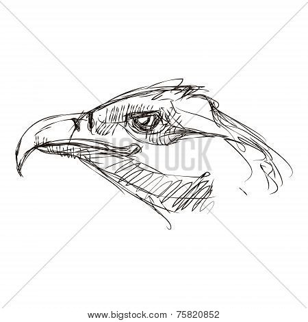 Sketch Of A Head Eagle
