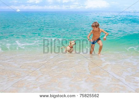 young happy child boy having fun with white dog in the sea, summer vacation