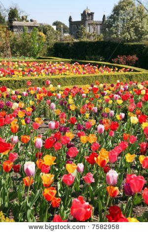 Jardín del castillo Arundel tulipanes