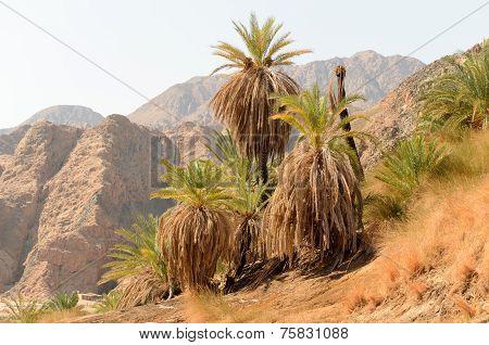 Wadi Genai Dahab