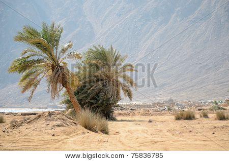 Wadi Ginai
