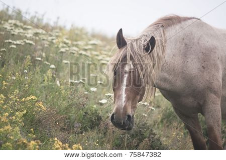 Peacefully Grazing