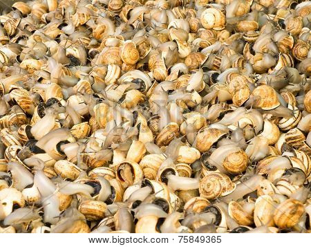 Snails In A Market.