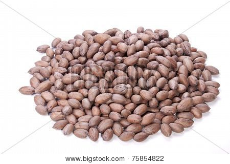 Pile Of Whole Unshelled Brown Pecan Nuts