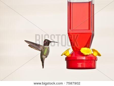 Hummingbird and feeder