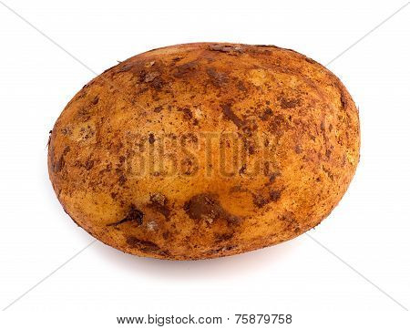 Horizontal View Of Freshly Picked Russet Potato Isolated Against White