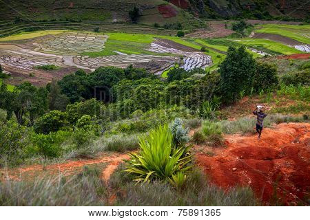 Green cultivated valley of Madagascar