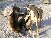 Monkey And Dog Good Friends