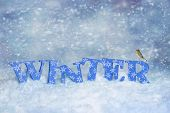 image of robin bird  - Winter letters in snow scene with robin bird - JPG